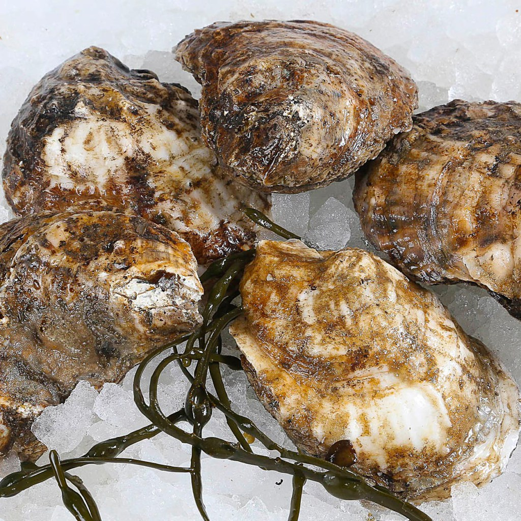 Bluepoint Oyster
