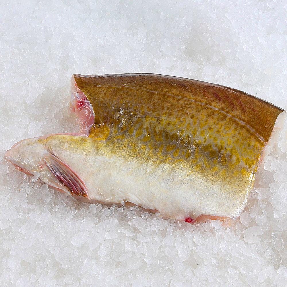 Cod Fish Collar