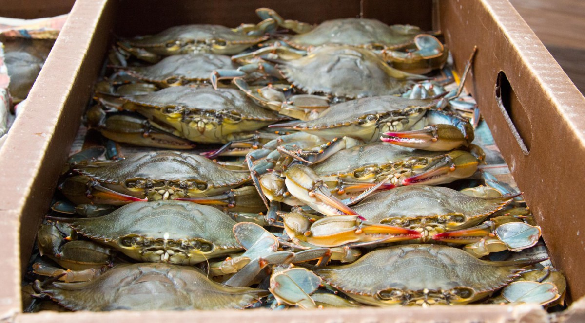 The spring time is always my favorite season. Baseball starts, and so does soft shell crabs!